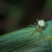 Tiny spider on a blade of grass