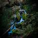 Cateract Canyon Falls