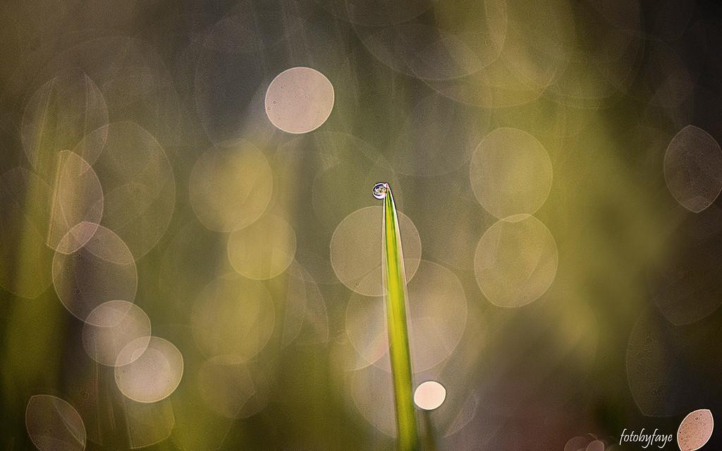 Early morning dew! by fayefaye
