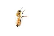 16th May 2019 - High Key Bee