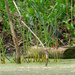 green heron log landscape