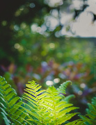 12th May 2019 - some ferns and a quantity of bokeh