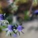 Purple Bloom by kgolab