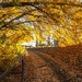 Autumn tunnel by pusspup