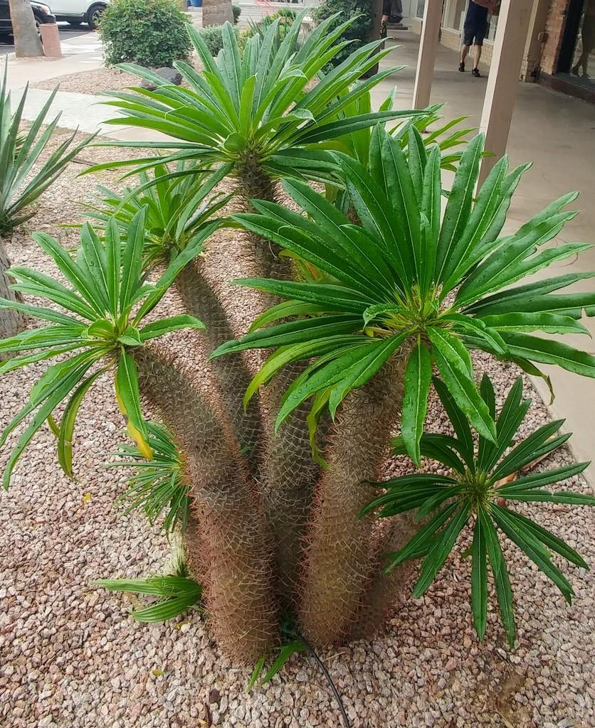 Desert Plant by harbie