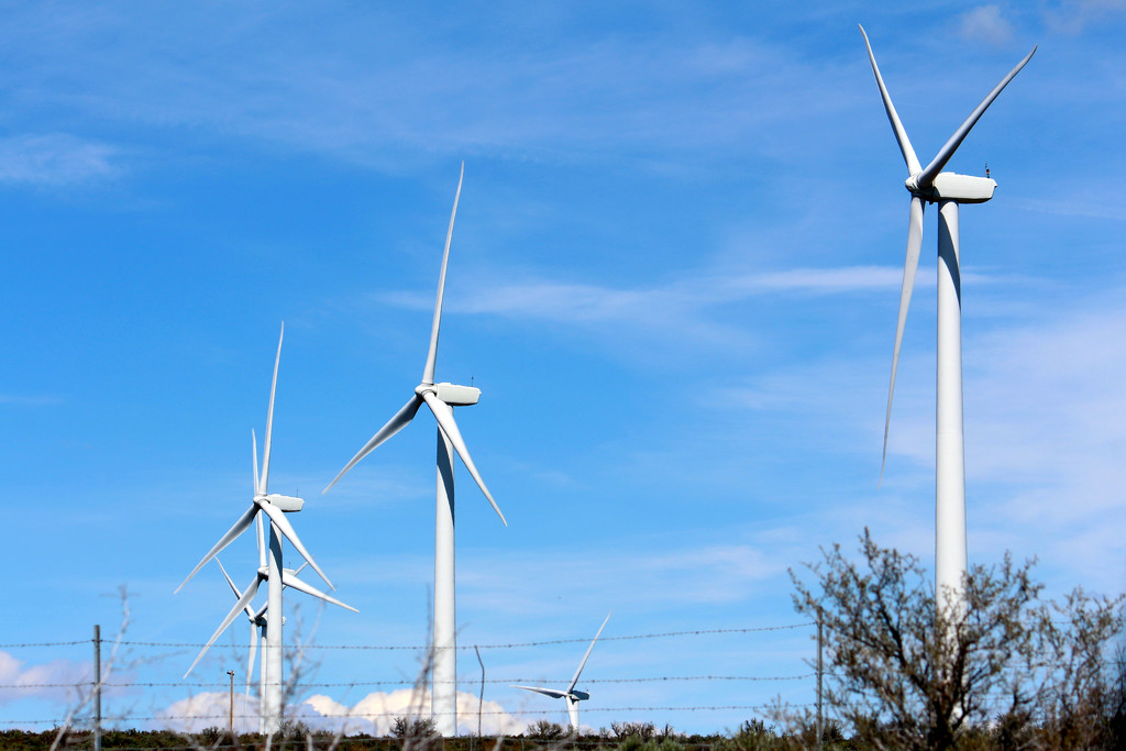 Wind Farm by gq