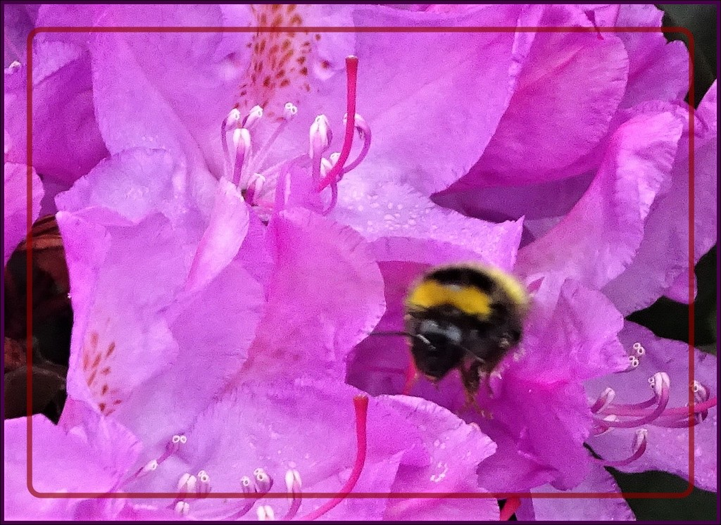 Busy Bee by beryl