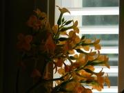 18th May 2019 - Orange Kalanchoe Flowers