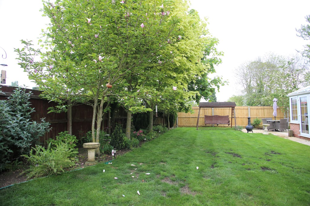 My Garden May 2019 by phil_sandford