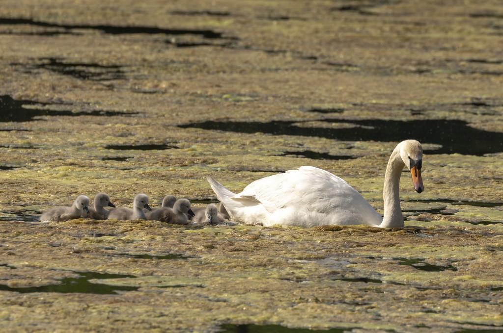 Happy Family by shepherdmanswife