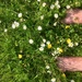 Barefoot through lush grass feels heavenly!
