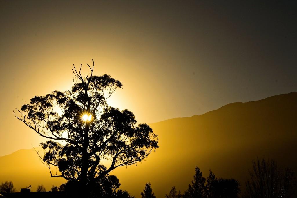 Golden stars by kiwinanna