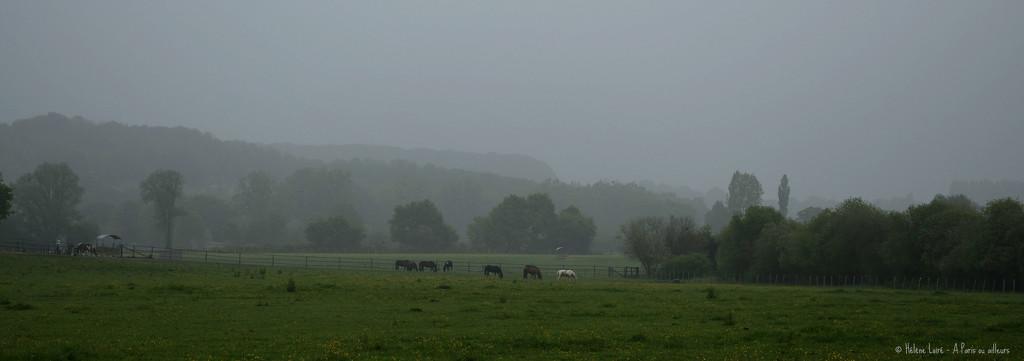 misty by parisouailleurs