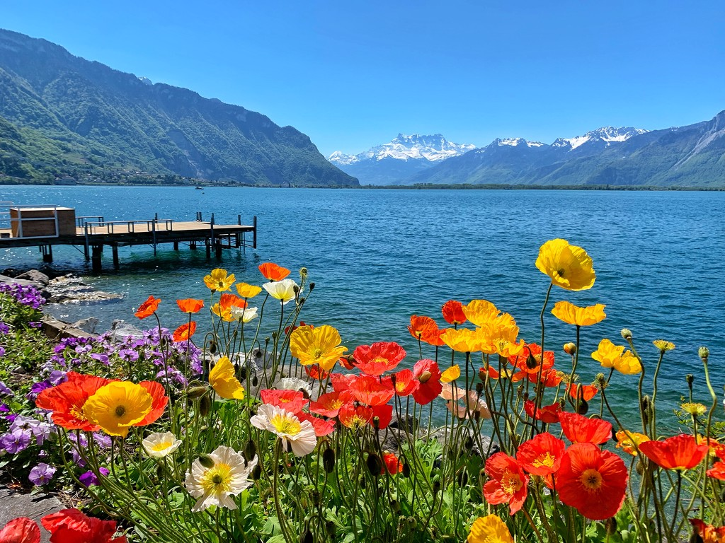 View from Montreux.  by cocobella