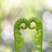 Two ferns! by fayefaye