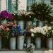 Islington Florist