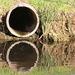 Beauty in a drain pipe!!