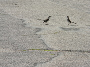 22nd May 2019 - Two Birds in Parking Lot