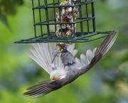 22nd May 2019 - Feathery Balance
