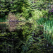 Reflected Pond