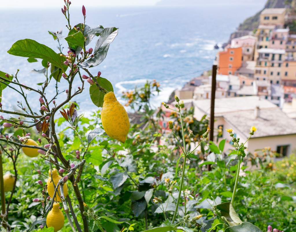 It is the scent of lemons by cristinaledesma33