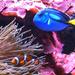 Something Fishy -  Nemo and Dory