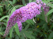 23rd May 2019 - Purple flowers