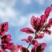 Gossamer spring leaves
