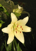 22nd May 2019 - Lily in the sunshine
