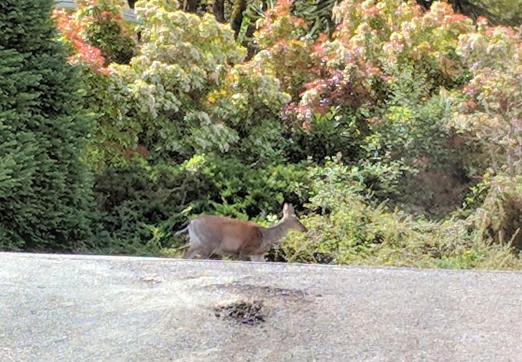 Deer Visit by gq