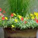 Happy Garden Container