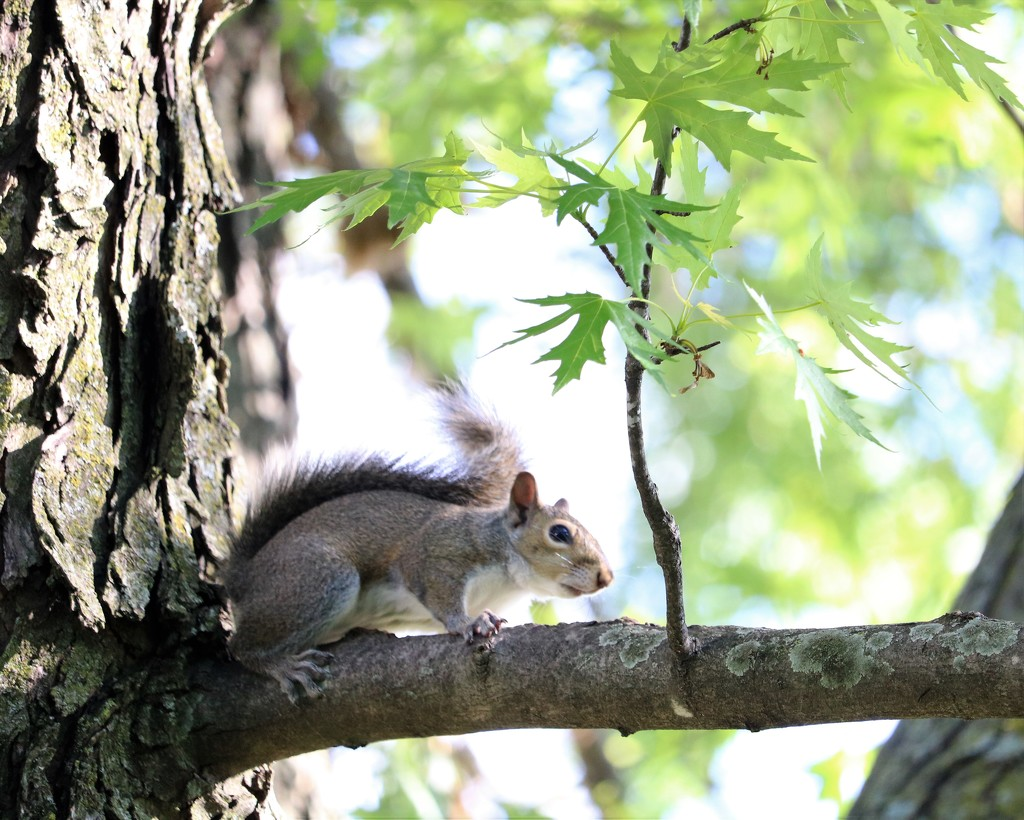 May 14: Squirrel by daisymiller
