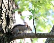 14th May 2019 - May 14: Squirrel