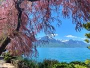 22nd May 2019 - Tamaris by the lake.