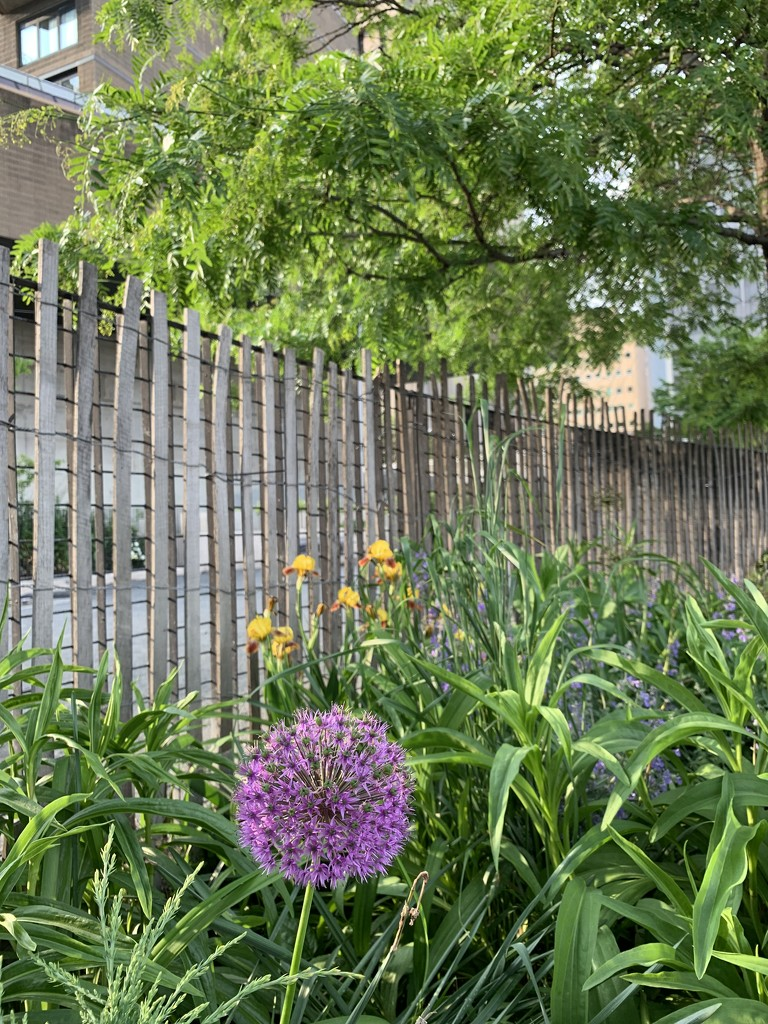 Flowers & fences by blackmutts