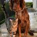 Scarlett & Moka by parisouailleurs