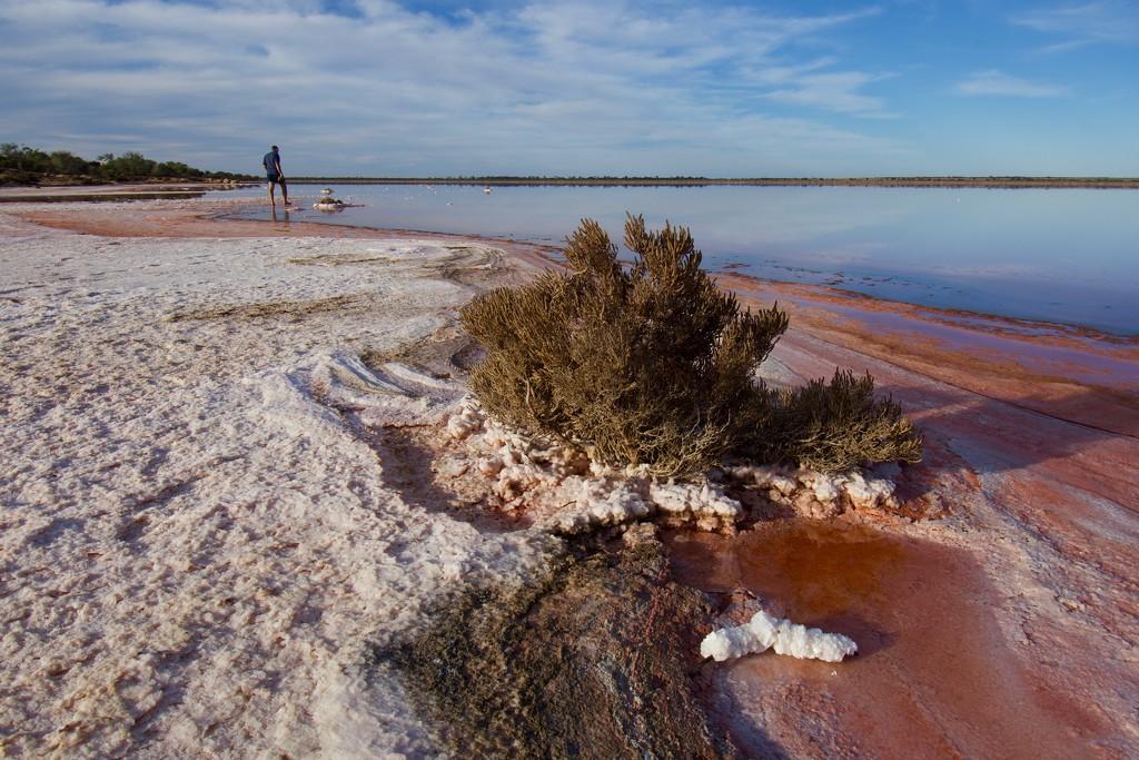 Lake Koorkoordine, Southern Cross_DSC1706 by merrelyn