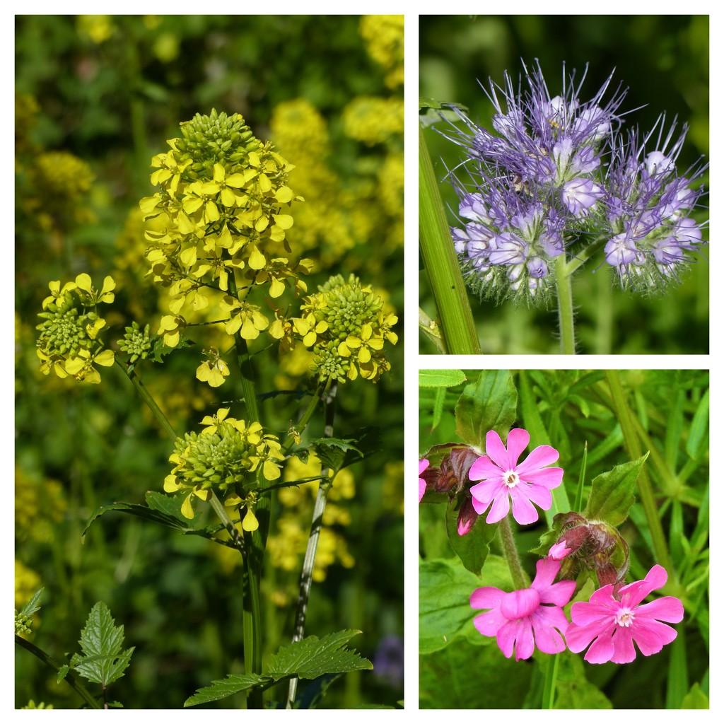 From Our Wild Flower Garden by susiemc