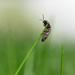 Green grass & bug by novab