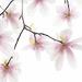 Under the magnolia tree! by fayefaye