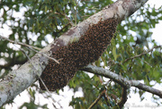 27th May 2019 - The Swarm