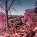 Infra red Autumn