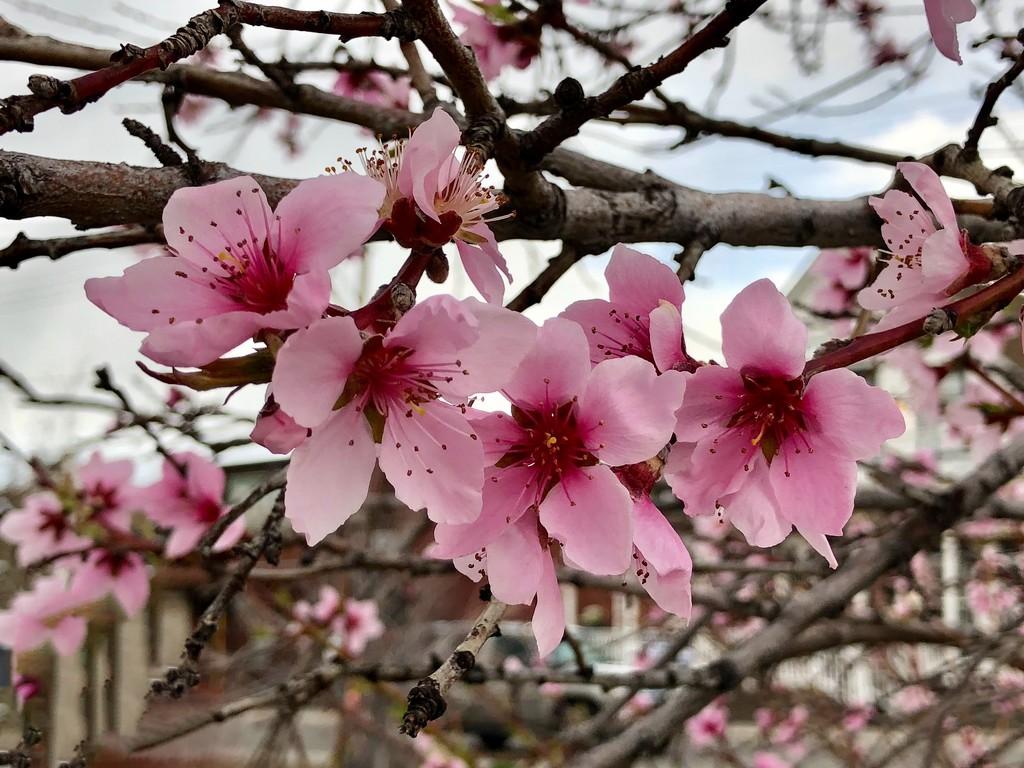 Like Wind Between Blossoms by gardenfolk