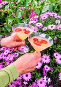 19th May 2019 - Elderflower martini