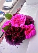 22nd May 2019 - Roses