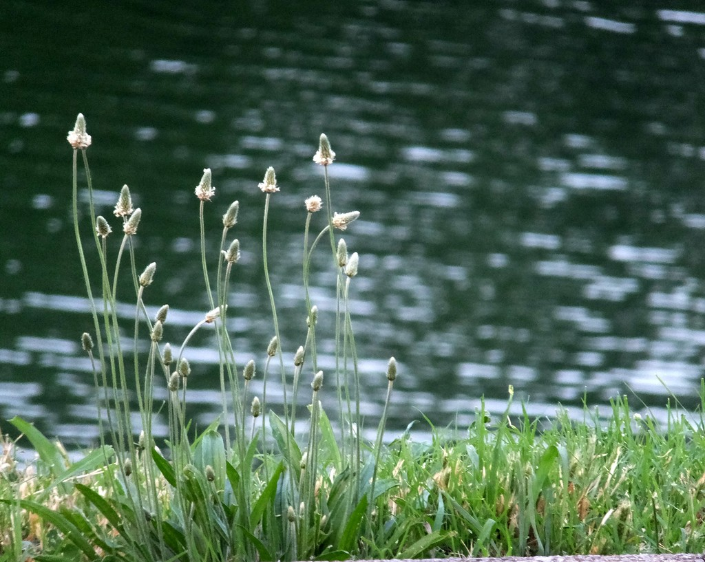 Weeds And Water by linnypinny