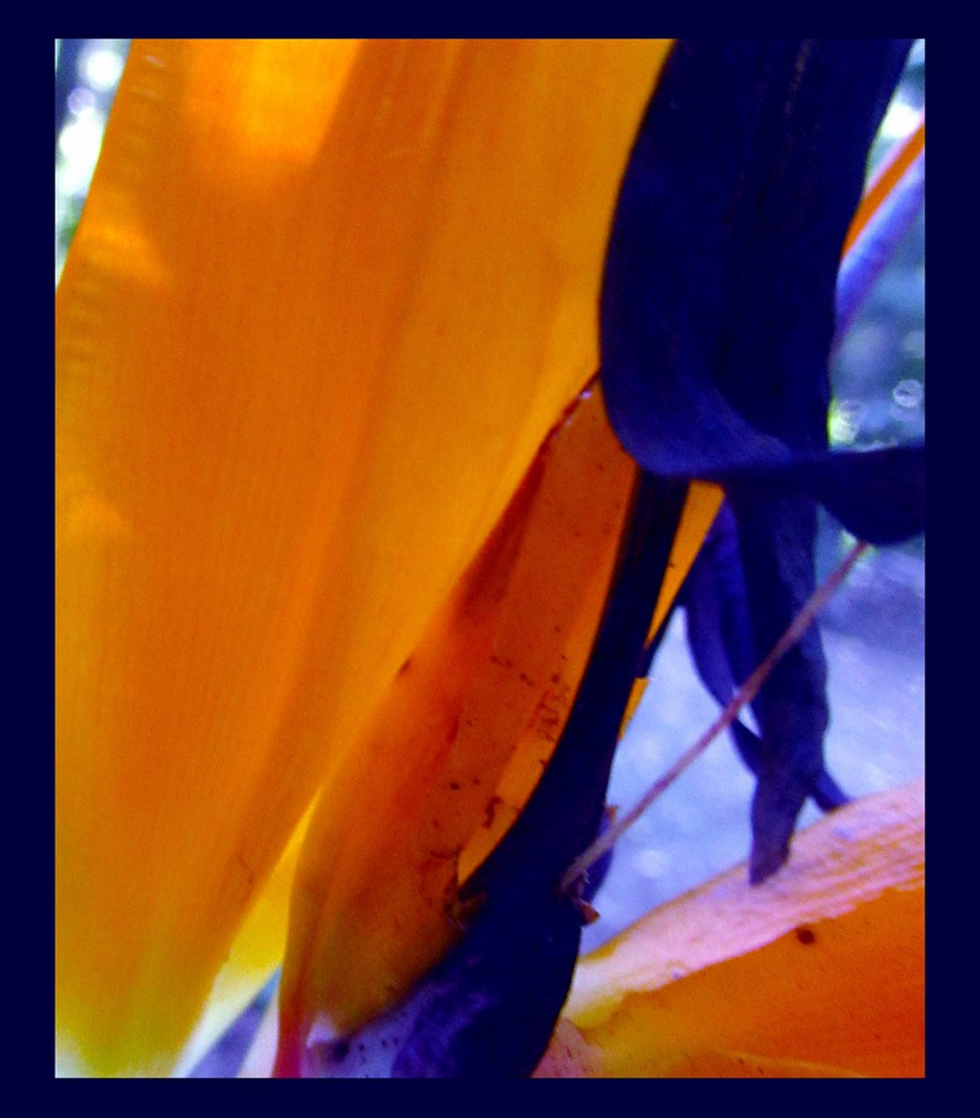 Orange and blue.. by robz