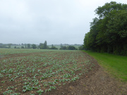 29th May 2019 - Monthly farm view - May