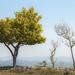 Clifftop treetops