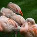 Flamingo Bundles